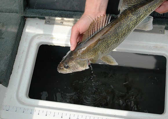 Game and Fish biologists continue to evaluate fisheries to determine if special regulations are at some point necessary
