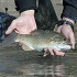 Catch and Release Fishing Tips for the Everyday Angler