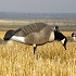 2014 Hunting Season Officially Opens in North Dakota