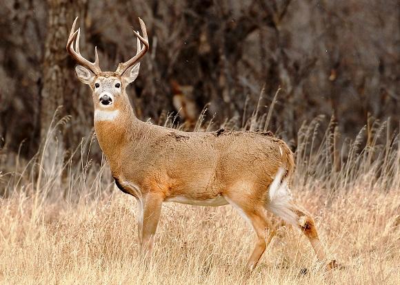 141105 deer