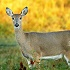 Some Thoughts on the 2015 Deer Hunting Season