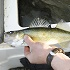 Should Fish Length Limits Be Introduced in North Dakota?