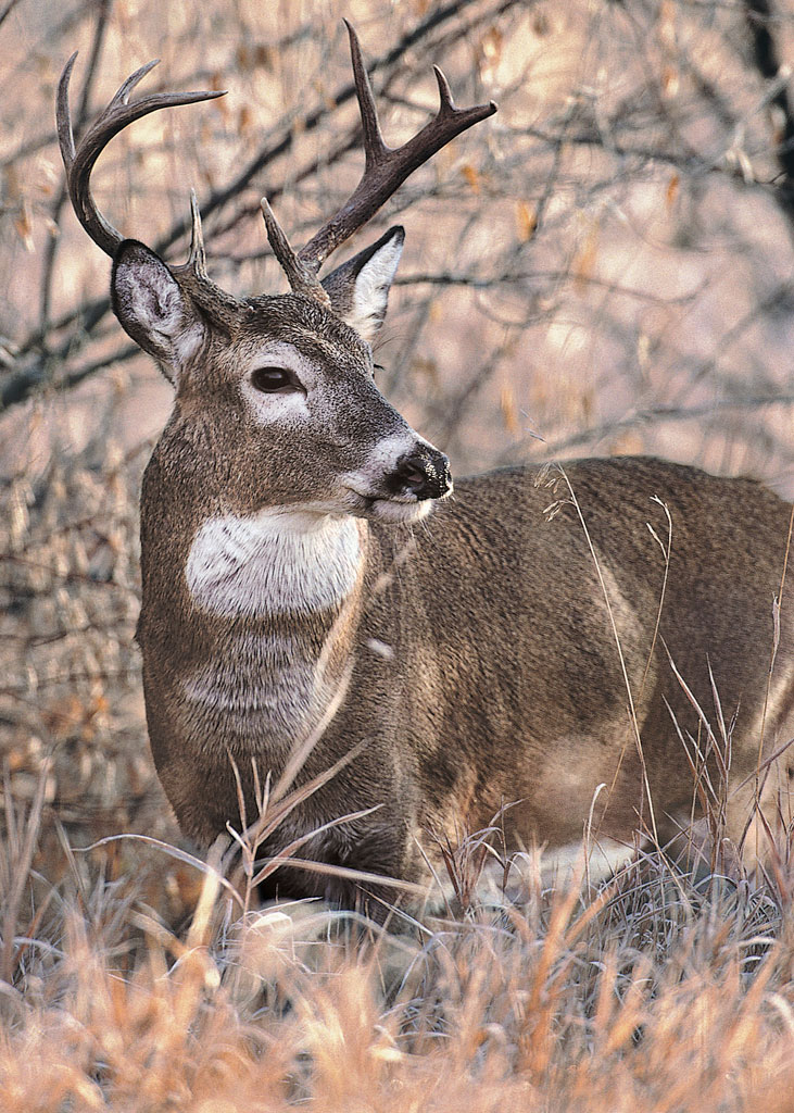 Hunting Out of State? Check the Chronic Wasting Disease Guidelines