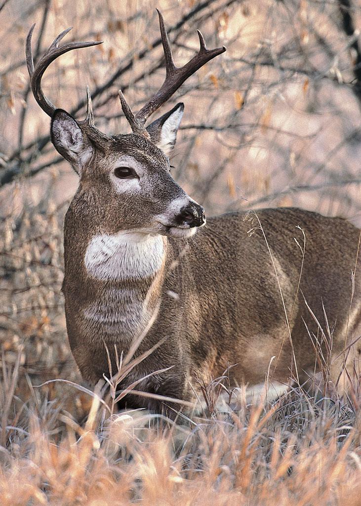 150826-deer-transport