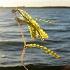 Invasive Species Threatening Aquatic Habitats in North Dakota
