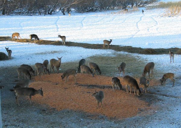 Feeding Wildlife in the Winter