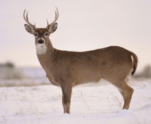 Deer Hunting Points