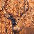 North Dakota Deer Season Reminders