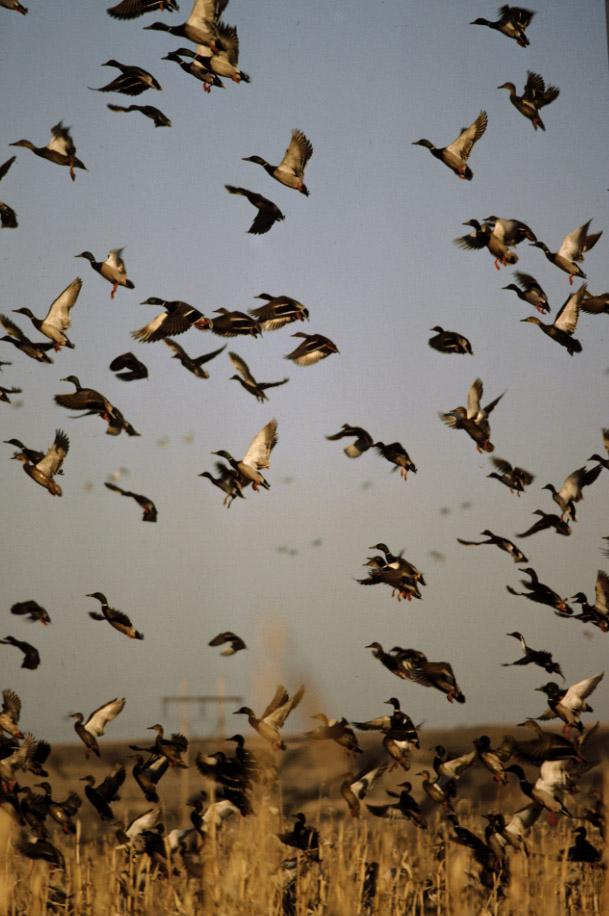 2010 Duck Season