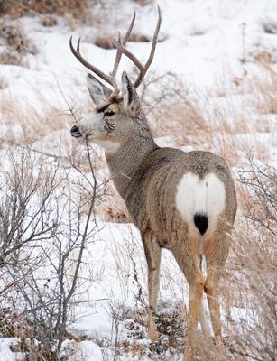 North Dakota Deer License Application