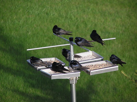 Purple Martin Association of the Dakota's