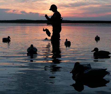 Waterfowl Seasons
