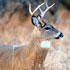 Q and A on Deer Hunting Rules and Regulations